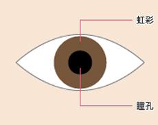 虹彩と瞳孔